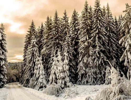 Solange die Erde stehet, soll nicht aufhören Samen und Ernte, Frost und Hitze, Sommer und Winter, Tag und Nacht. 1. Mose 8,22