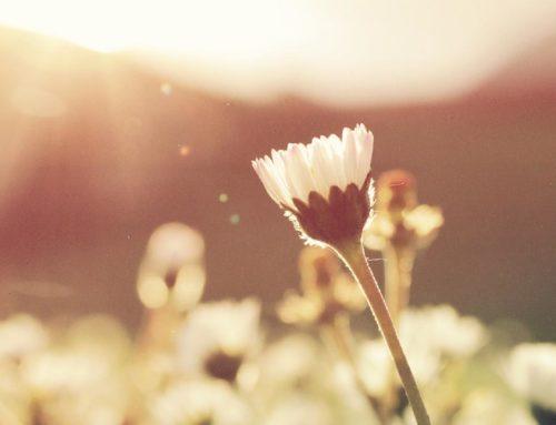 Denn siehe, der Winter ist vergangen, der Regen ist weg und dahin; die Blumen sind hervorgekommen im Lande Hl 2,11-12