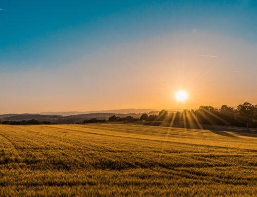 Wer im Sommer sammelt, der ist klug; wer aber in der Ernte schläft, wird zuschanden. Spr 10,5