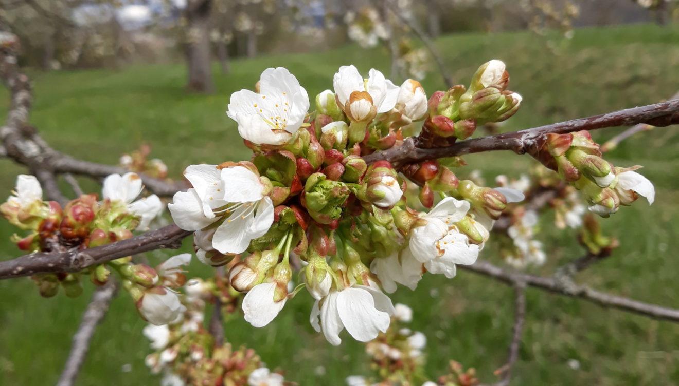 Sommerzeit -- Blütenzeit -- Erntezeit